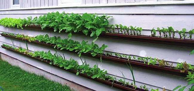 Gutters being used as a garden planter