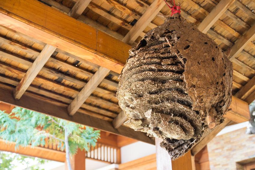 bees in gutter