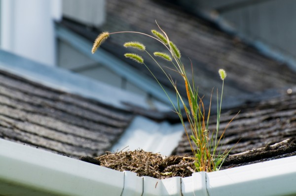 Dangers Of Clogged Gutters   Gutter Cleaning Lehigh County   Berks County   Northhampton County